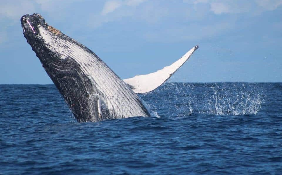 Activities – Whale Watching